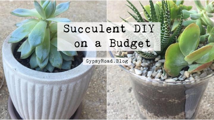 Succulent DIY on aBudget