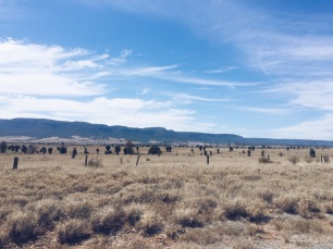 The Blackdown Tablelands